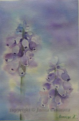 Grape Hyacinth - watercolour, 17x26.5cm