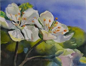 Apple Blossom - watercolor, 26x34cm