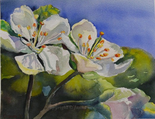 Apple Blossom - watercolor, 26x34cm