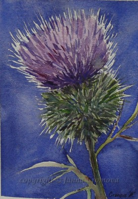 Milk Thistle - watercolour, 19x27cm