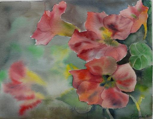 Nasturtium - watercolour, 26x33cm